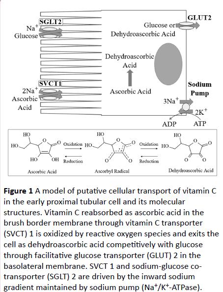cellular-molecular-medicine-putative-cellular-transport